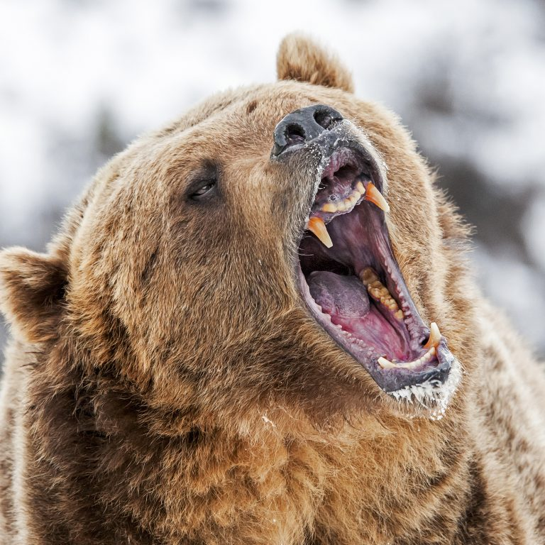 Markets Update: Bears Continue to Drag Cryptocurrency Prices Down